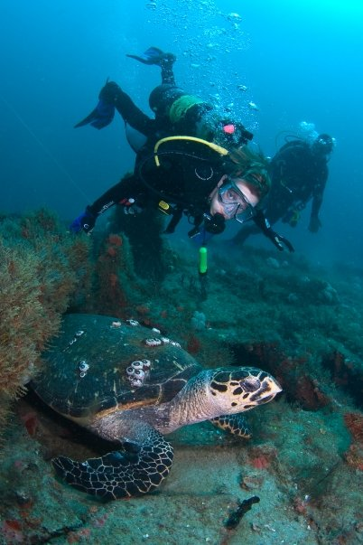 Scuba-Divers-with-Turtle