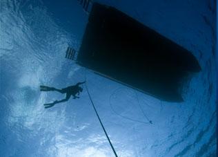 Total Immersion Program (TIP)